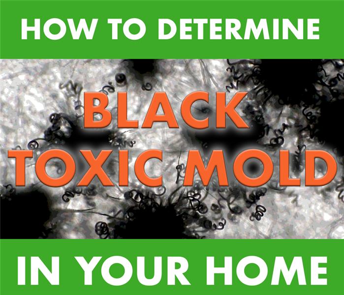 black mold background with title saying how to determine black mold in your home